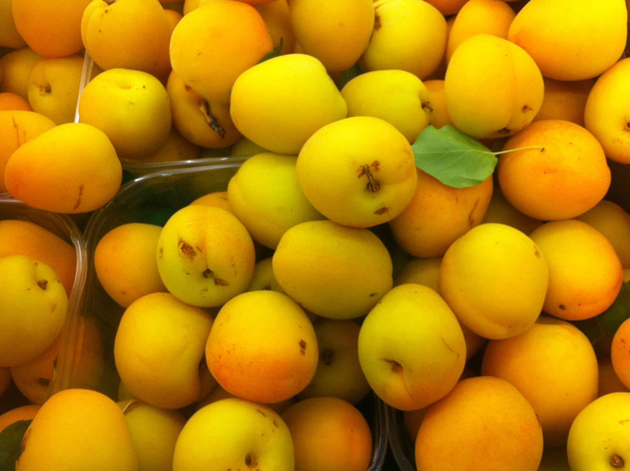 Italians love their apricots and so do I
