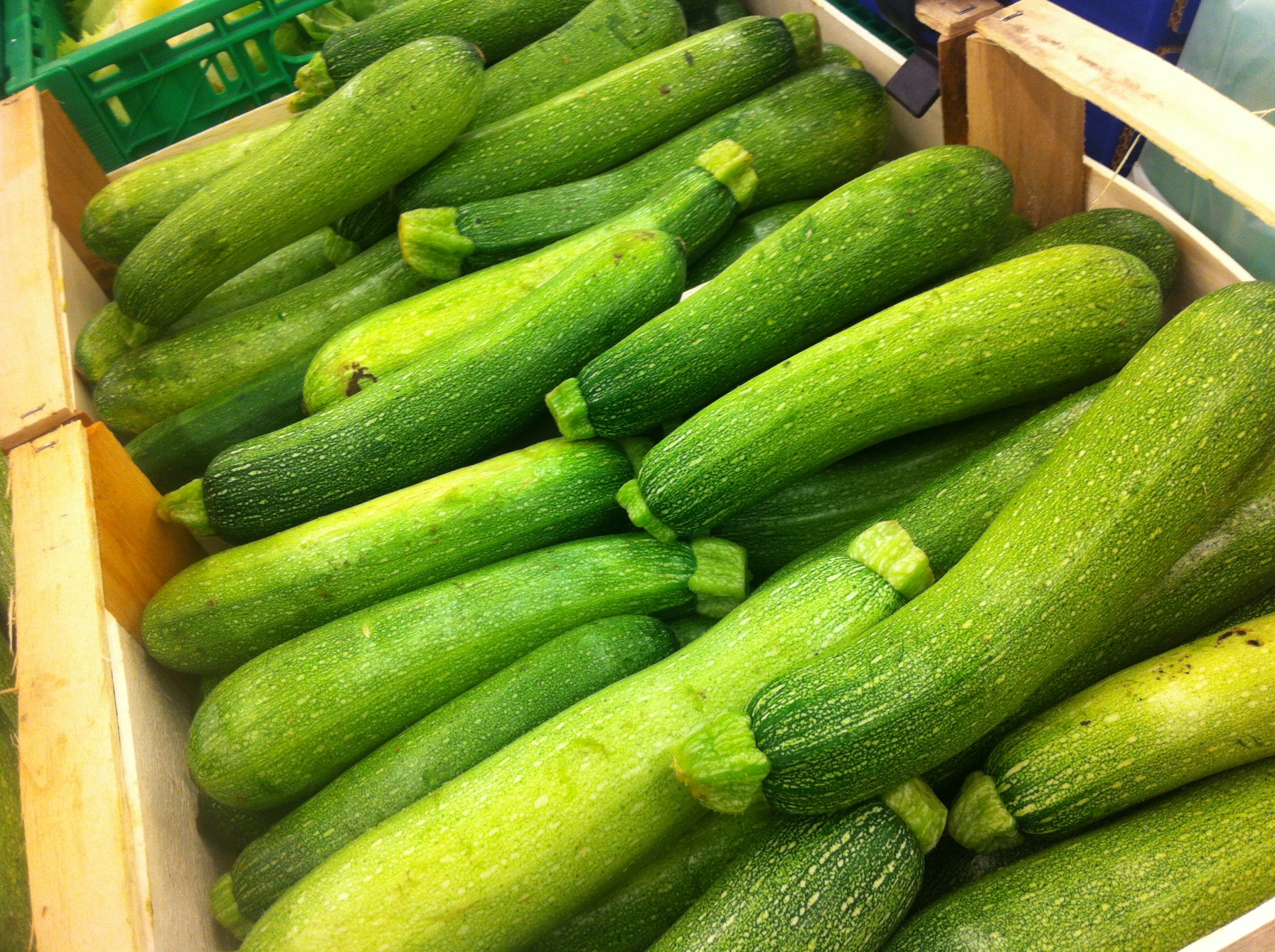 Zucchine, Italian staple food. It's in most dishes and grows everywhere.